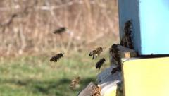 Bees flying into a beehive - slow motion Full HD Stock Footage