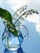lily of the valley in jug - stock photo