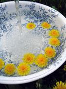 Classic wash basin and Dandelions - stock photo