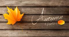 Abstract autumn background Stock Illustration