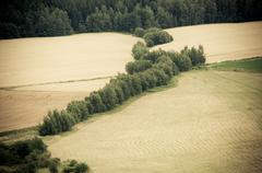 Row of green trees across farm field Stock Photos