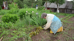 Old woman with workwear carefully grub weeds beds Stock Footage