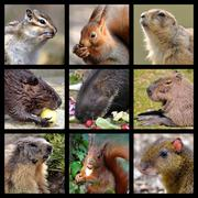 Mosaic photos of rodents Stock Photos