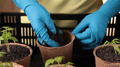 Filling bowls peat soil for young plants Stock Footage