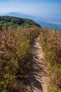 walkway in alpine savanna grassland of doi inthanon, chiang mai, thailand - stock photo