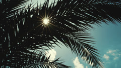 Sun playing in palm leaves - stock footage