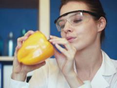 Biochemist examine fresh yellow pepper in laboratory NTSC Stock Footage