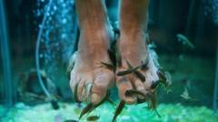 Garra Rufa fish pedicure Stock Footage