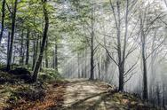Stock Photo of Beautiful nature photography inside the mystic forest