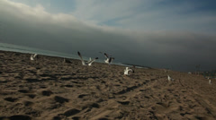 Chasing Birds On Beach Stock Footage