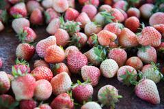 Stock Photo of fresh strawberrys at doi ang-khang