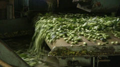 Hops picking machine in Germany Wolnzach farmhouse Stock Footage