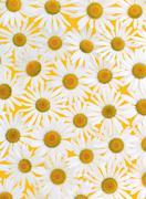 Fresh daisies over yellow background Stock Photos