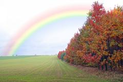 Green filed of winter grain crops and  rainbow Stock Photos
