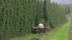 Germany Hops field Bavaria Wolnzach Stock Footage