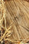 Detail of wooden cut texture and dry grass hay - frame - stock photo