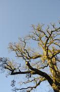 Tree Branches in Lienz, Austria - stock photo