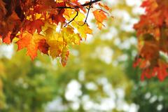 beautiful colorful autumn  leaves in the park - stock photo