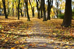 leaf fall in park - stock photo