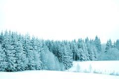 trees with snow - stock photo
