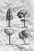 set of trees with leaves on crumpled paper - stock illustration