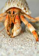 Beautiful hermit crab in his shell close up Stock Photos