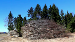 heaps of firewoods from cut trees - stock footage
