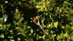Close Up and Focus in on a Lady Bug Stock Footage