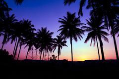 palm trees silhouette - stock photo