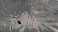 Spider running out of frame - stock footage