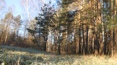Zoom in and zoom out of forest Stock Footage