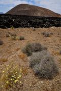Timanfaya vulcanic  spain  bush Stock Photos