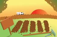 Stock Illustration of sunset and cow on vegetable garden