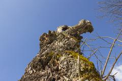 Stock Photo of old tree with moss on roots