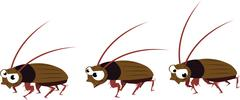 funny cockroach walking - stock illustration