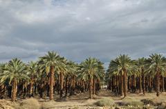 Lehto palmuja autiomaassa lähellä 'kuollut meri', israel Kuvituskuvat