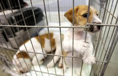 Dogs in a cage Stock Photos