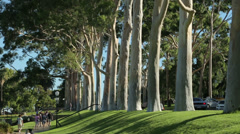 Visitors walk past gum trees, park lane, kings park, perth, australia Stock Footage