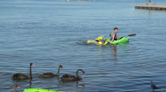 Australian black swans swim past canoeist, matilda bay, perth, australia Stock Footage
