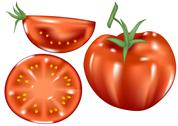 Stock Illustration of fresh tomatoes