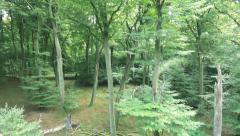 Flight From Ground To Treetop Along Tree Stump Stock Footage