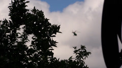 Helicopters Sheriff, Police, orange grove tree Stock Footage