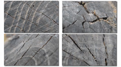 Four types of texture of tree Stock Footage