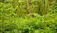 Stock Photo of lush vegetation