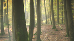Trees In The Forest In Autumn - With Sharpness Shift - stock footage