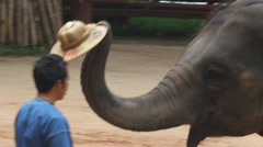 Mahouts with an elephant during the show Stock Footage