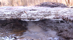 melting snow, ice, in a forest - stock footage