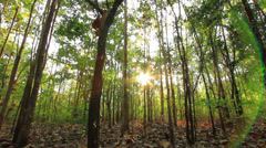 Tropical forests Stock Footage