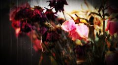 Dead Roses Grunge horror Stock Footage