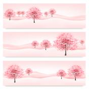 three spring banners with blossoming sakura trees. vector. - stock illustration